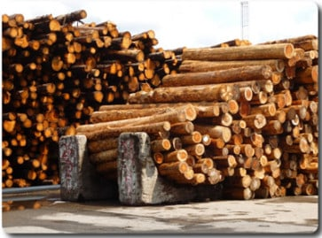 Sustainable Timber Frame Construction